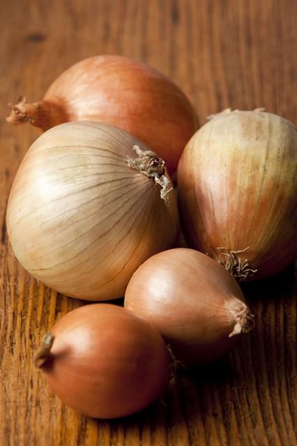 onions_gl_10nov10_rex_b_426x639