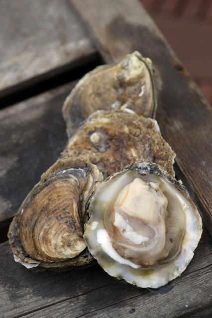 oysters_gl_10nov10_rex_b_426x639