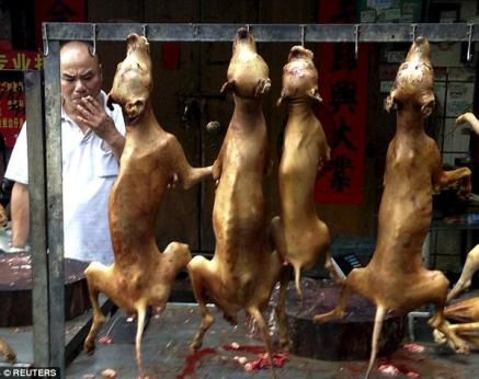 Annual dog meat festival in held in China on Sunday, June 21, 2015 despite warning of health risk posed by the celebration. (Photo Credit: Reuters)