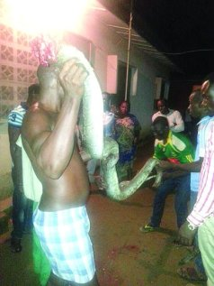 Man carrying the dead 19-year-old python which lived with pastor for over 10 years.
