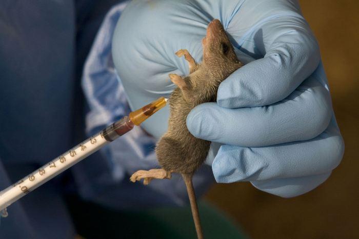 Lassa Fever, State, Outbreak, Bauchi, Cholera
