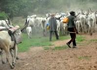 Anti grazing, Fulani Herdsmen, Sentenced, Benue