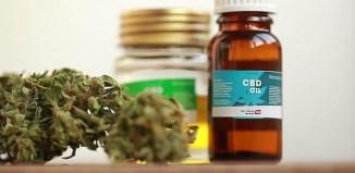 marijuana cannabis weed cbd oil