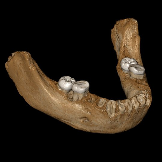 A virtual reconstruction of the Denisovan jawbone that was found (Picture: Jean-Jacques Hublin/PA)