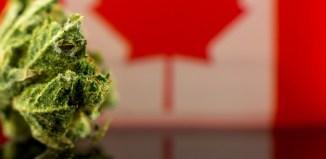 canada weed marijuana