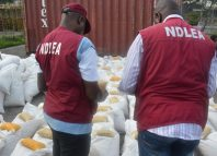Drug Trafficking Illicit Drugs NDLEA