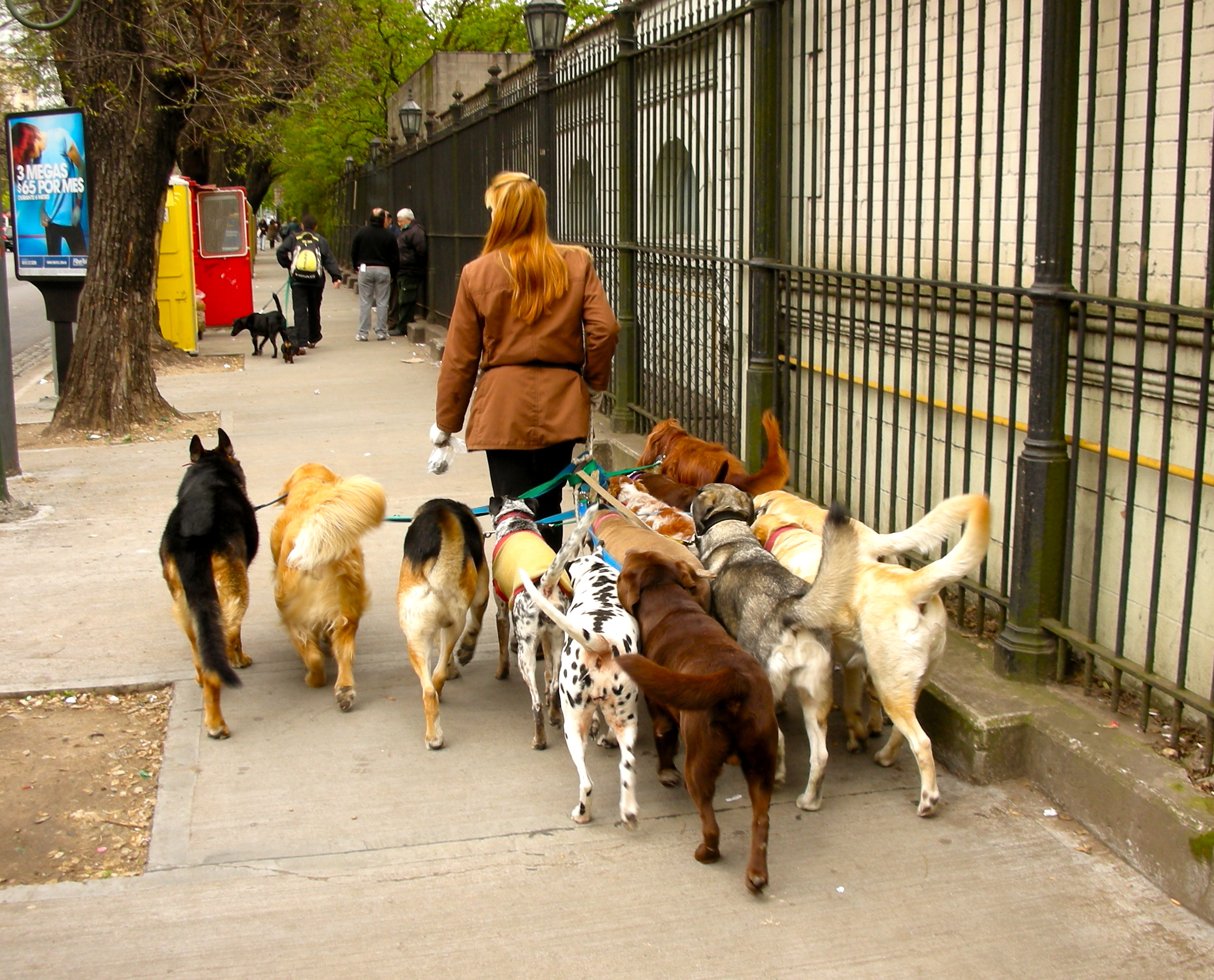 Government oversight through licensing and regulation is for Puppy dog walker