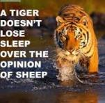 tiger concern