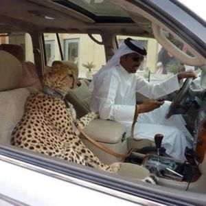 My agent said that the Cheetah was a completely legitimate use of the funds. I didn't really understand, but I'm sure he's watching out for me.