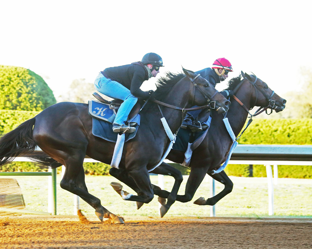 Bradester (inside) working in company at Keeneland - Keeneland Photo