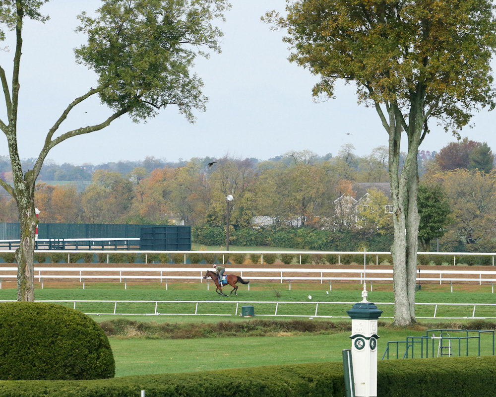 Grand Arch - Morning Workout - Keeneland Race Course - KEE - 102