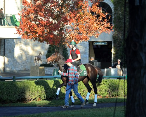 Harmonize heads to the track for a workout at Keeneland on October 22nd - Keeneland Photo