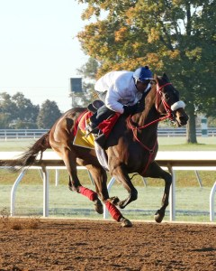 Private Zone breezing at Keeneland - Keeneland Photo