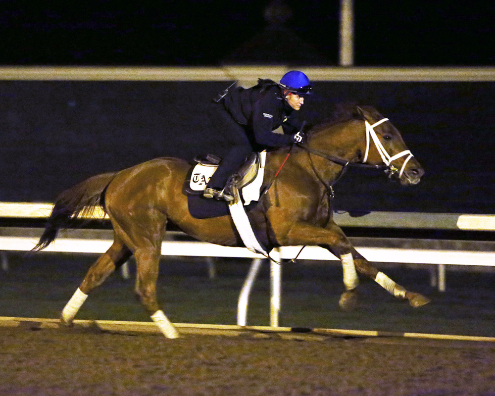 Red Rifle breezing early in the morning at Keeneland - Keeneland Photo