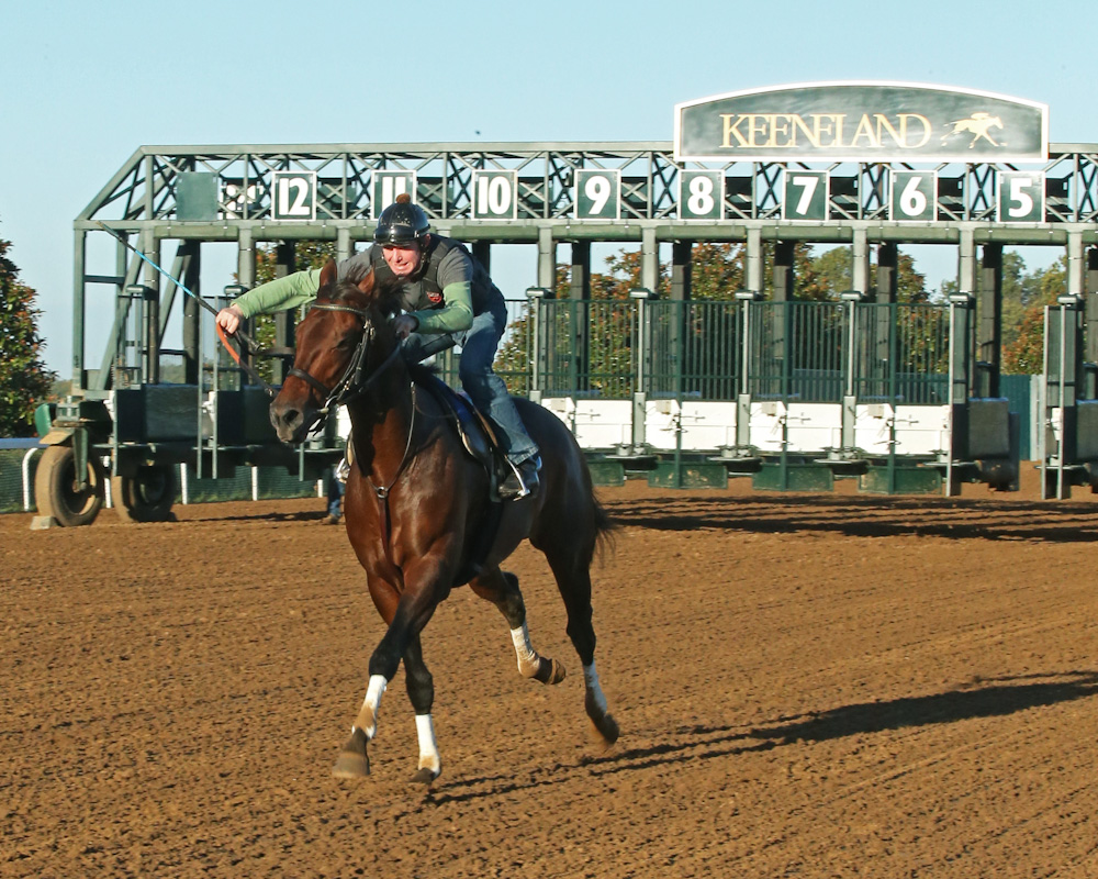 Slideshow: Runhappy's Workout at Keeneland