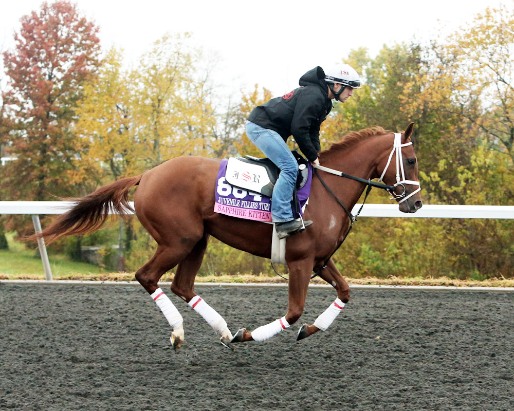 Sapphire Kitten - Morning Training - Keeneland Race Course - 102