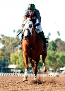 In his final work in preparation for Santa Anita's Grade II, 1 1/16 miles San Pasqual Stakes on Jan. 9, reigning Horse of the Year California Chrome, who was fitted with blinkers, worked a snappy six furlongs in 1:10.04 under Victor Espinoza prior to today's (Saturday,Jan. 2, 2016) first race at Santa Anita Park, Arcadia, CA.Benoit Photo