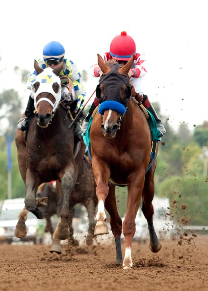 Collected pulls away from Laoban in the homestretch of the Sham Stakes (gr. III) at Santa Anita - Benoit Photo