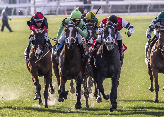 Cash Control, center, lime green cap, wins the Daisy Devine Stakes at the fair Grounds Race Course in New Orleans, LA February 20, 2016. The winning jockey was Shaun Bridgmohan. Photo By Alexander Barkoff / Hodges Photography