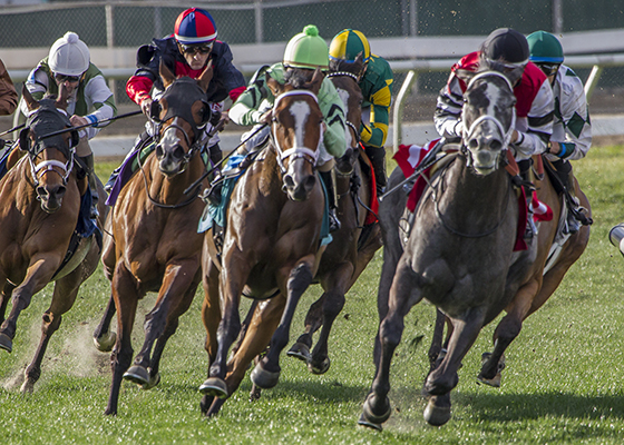 Cash Control, center, lime green cap, goes on to win the Daisy Devine Stakes at the fair Grounds Race Course in New Orleans, LA February 20, 2016. The winning jockey was Shaun Bridgmohan. Photo By Lou Hodges, Jr. / Hodges Photography