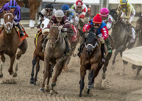 Gun Runner, center, white cap, turns for home in the Fair Grounds stretch and goes on to win the Veterans Ford Risen Star Stakes, (GrII) Saturday, February 20, 2016 in New Orleans, LA.  Shaun Bridgmohan was the winning jockey for the Winchell Thoroughbreds 3 year-old-colt.  Steve Asmussen was the trainer of Gun Runner. Photo By Alexander Barkoff  / Hodges Photography