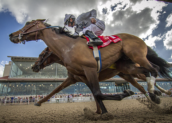 Majestic Harbor wins the Mineshaft Handicap (Gr III) at the Fair Grounds Race Course, Saturday, February 20, 2016 in New Orleans, LA.  Corey Lanerie was the winning jockey. Photo by Amanda Hodges Weir / Hodges Photography