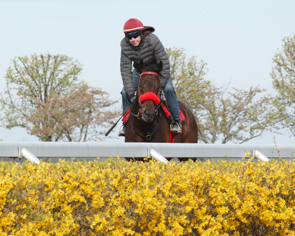 American Dubai Training Sharply for Blue Grass Stakes