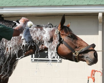 Bath time for Brody's Cause at Churchill Downs - Coady Photography/Churchill Downs
