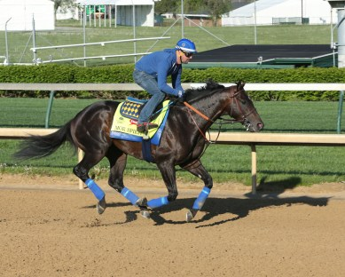 Mor Spirit galloping at Churchill Downs - Coady Photography