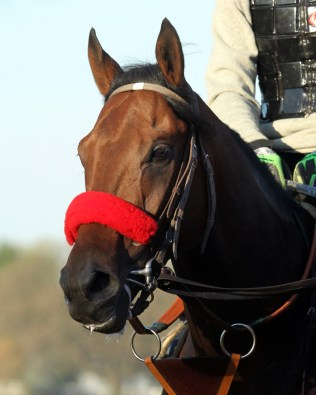 Nyquist training at Keeneland - Coady Photography/Keeneland Photo
