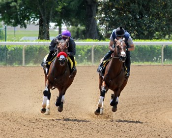 Nyquist (outside) works a mile in company with Ralis at Keeneland - Coady Photography/Keeneland Photo