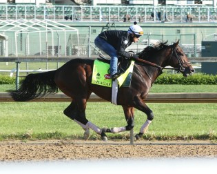 Shagaf galloping at Churchill Downs - Coady Photography