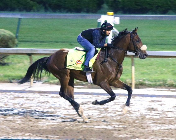 Suddenbreakingnews galloping at Churchill Downs - Coady Photography