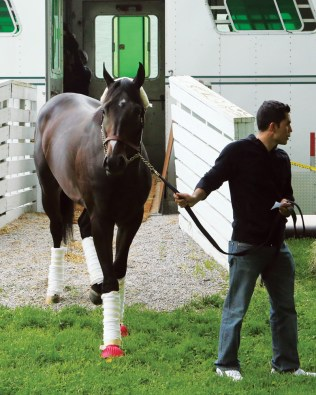 Danzing Candy arriving at Churchill Downs for the Kentucky Derby - Coady Photography