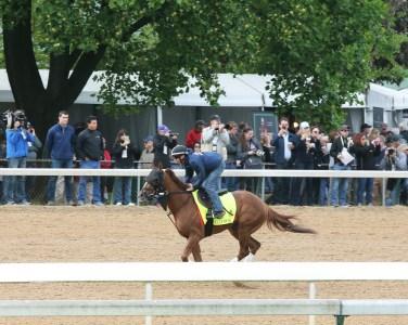 Fellowship galloping at Churchill Downs - Coady Photography