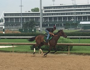 Ahh Chocolate breezing at Ellis Park on August 1st - Photo by Jennie Rees