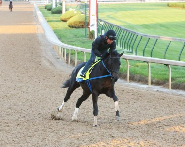 Local Hero galloping at Churchill Downs - Coady Photography