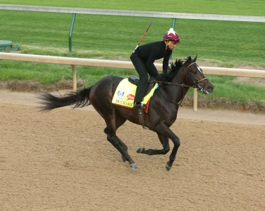 McCraken galloping at Churchill Downs - Coady Photography