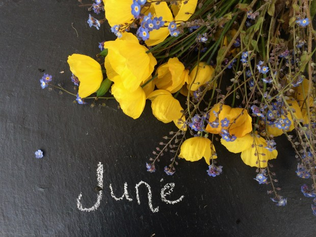 Yellow and purple flowers on slate background