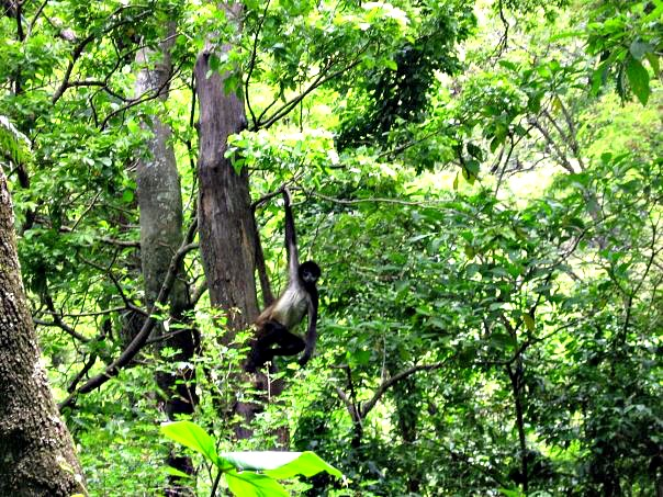 Monkey hanging out in the trees