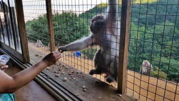 monkeyhand