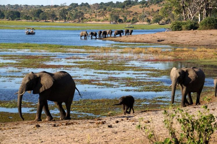 Africa 1190