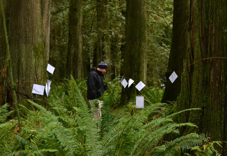 McLellan forest with poems