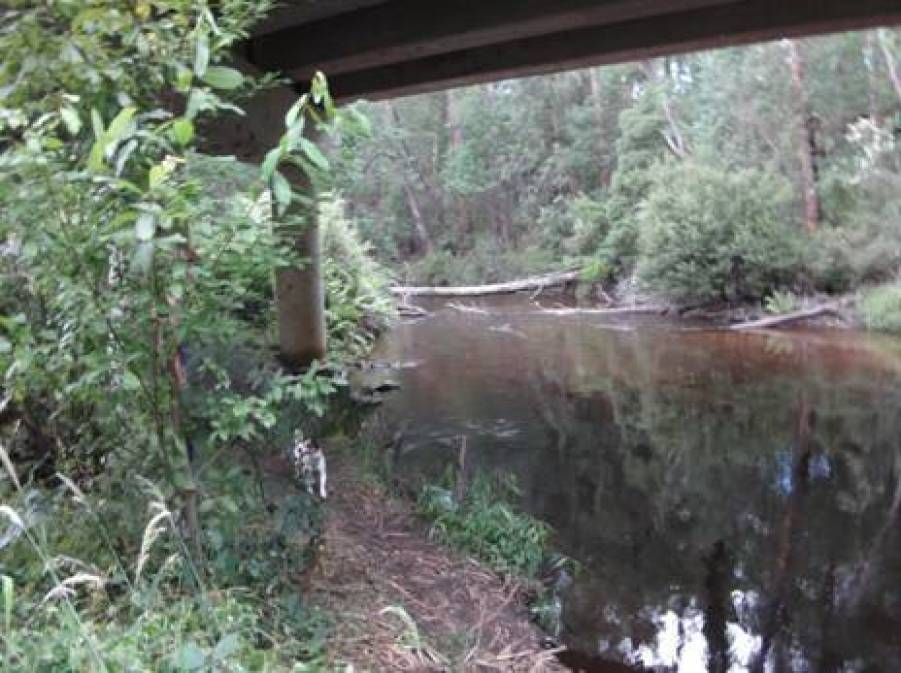 Under the Noojee Bridge (near Toorongo confluence).