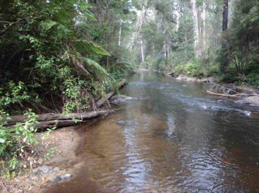 West Tanjil River, Costins Rd near Fumina South looking downstream.