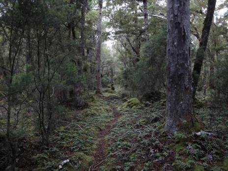 South Coast Track Fiordland NZ: Wairaurahiri to Waitutu