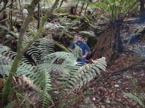 The boiler is situated in a beautiful fern gully...