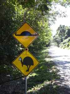 Cassowaries: Don't expect to see either, visit a zoo.
