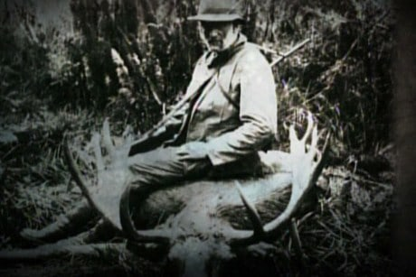 Moose Hunting in Fiordland
