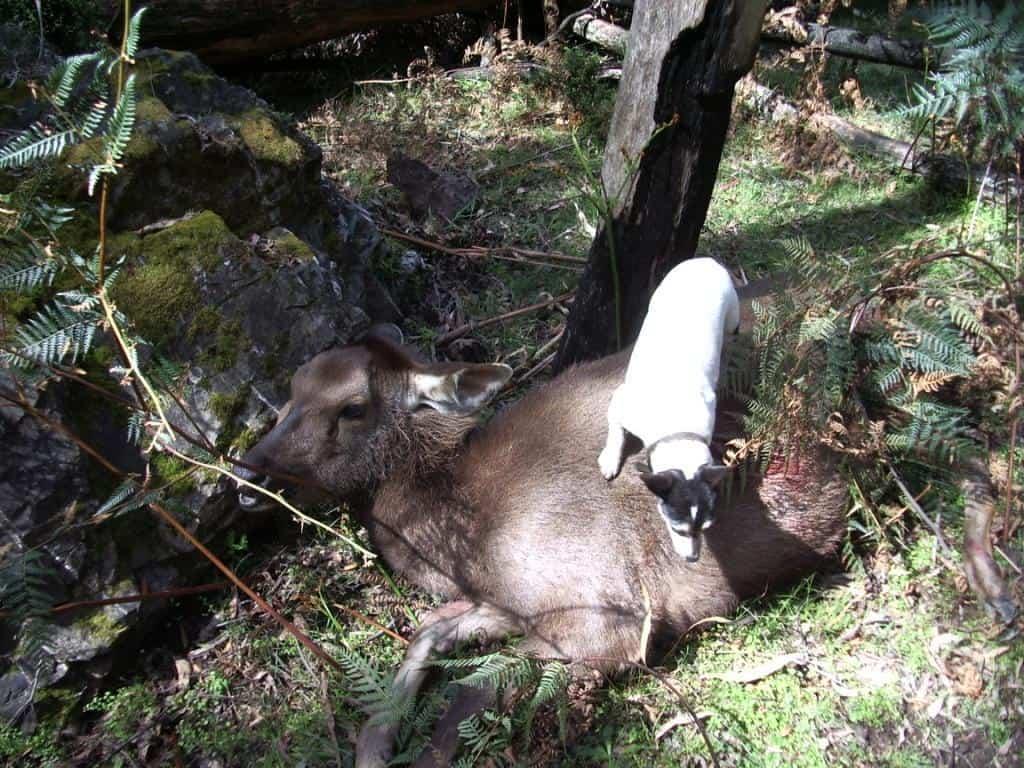 fd9a7edd133fe Sambar Deer Stalking #101: |